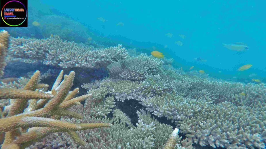 OPEN TRIP Jelajah Tiga Pulau, Kelor, Onrust dan Cipir...