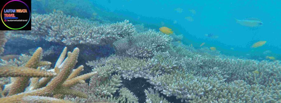 Paket Wisata Pulau Seribu Murah